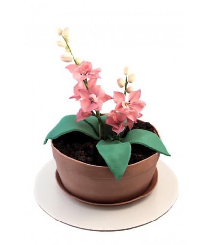 Торт горшок с орхидеей
